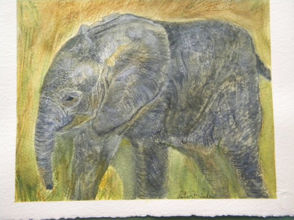 My elephant watercolor I did for my daughter a few years ago.  Elephants are her favorite animal.  (I guess now she likes hedgehogs, too).