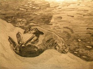 Sea Lion Pencil Drawing
