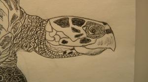 Hawksbill S.T.  Close-up