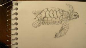 Loggerhead Hatchling 1
