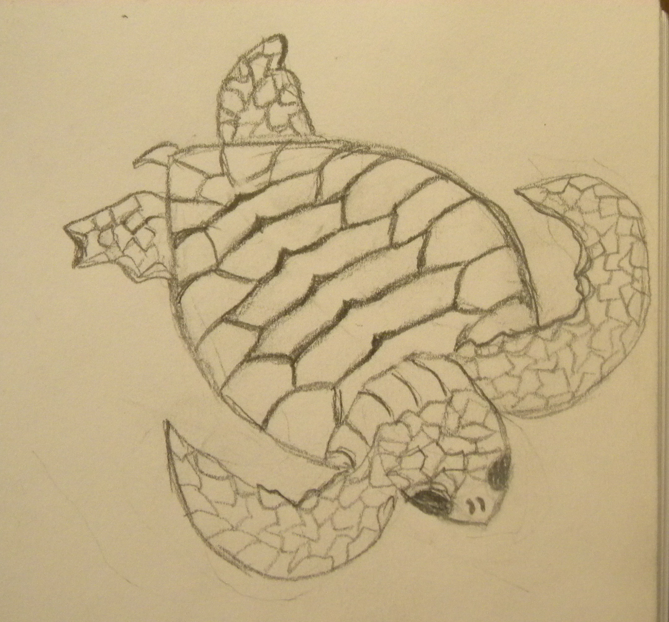 Realistic sea turtle drawing