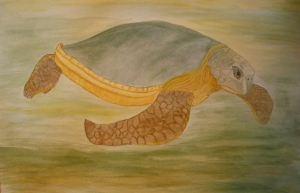 Australian Flatback Sea Turtle