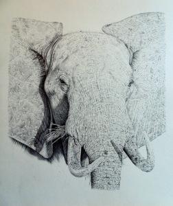 Elephant after 60 hours