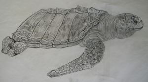 Olive Ridley Ink on Tracing paper