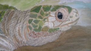 Olive Ridley head shot