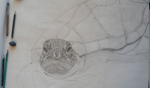 Kemp's Ridley in Progress