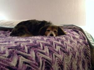 My dog, Brownie