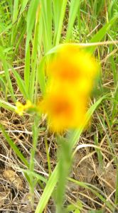 Blurry yellow flowers