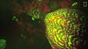 glowing-turtle