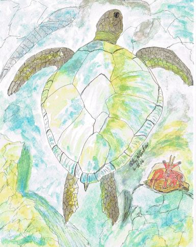 Sea Turtle and Hermit Crab