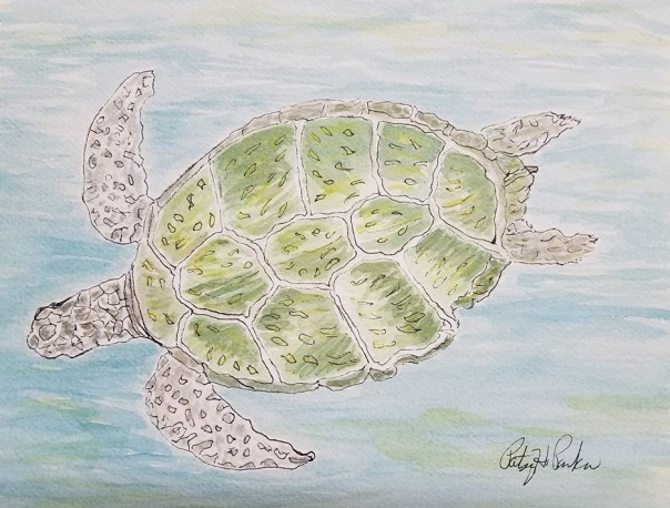 green-sea-turtle-2-copy