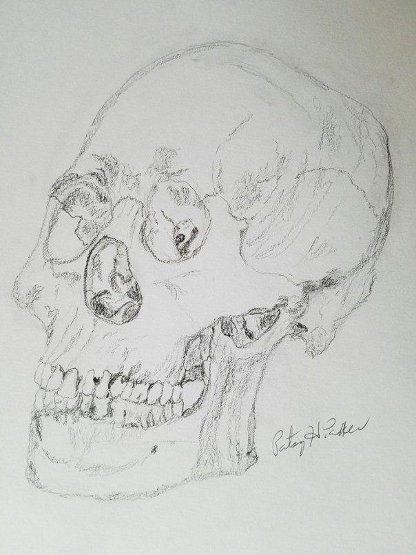 human-skull-in-pencil