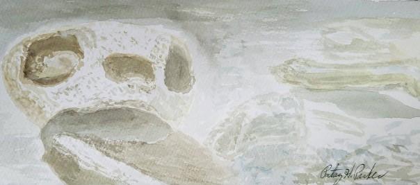 sea-turtle-skull