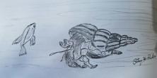 Hermit Crab Drawing