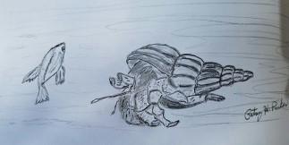 Hermit Crab Drawing