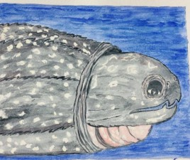 Larry the Leatherback