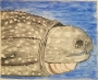 Larry the LonelyLeatherback