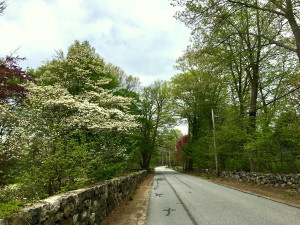 country road, New England