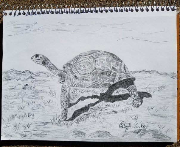 Aldabra giant tortoise drawing patsys creative corner this tortoise is one of the largest in the world it can live up to 150 years in the wild and longer in captivity you can read more about them here publicscrutiny Gallery